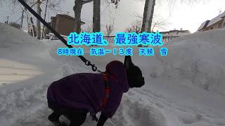 北海道に最強寒波がやってきました。テテは、相変わらず朝の散歩に行き...