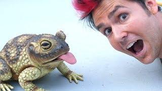 Petting Biggest Frog Surprise!