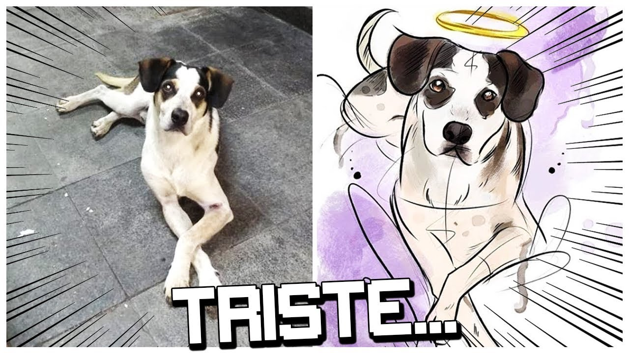 Entenda O Caso Do Cachorro No Carrefour Leo Otaco
