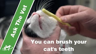 You can brush your cat's teeth- Companion Animal Vets