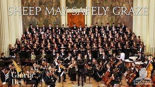 Bach - Sheep may safely graze - Cantata 208 - Gloria Dei - Concert Vocal-Simfonic Oradea - Nagyvárad