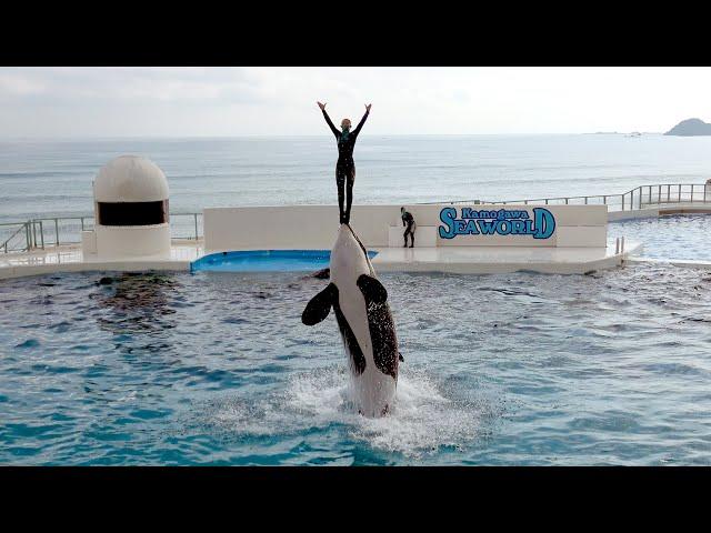 Orca Show at Kamogawa Sea World 【4K】
