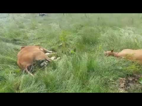 Cattle shot by armed forces in Co Monaghan