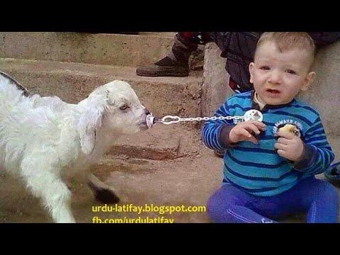 arab funny clips. arab funny video