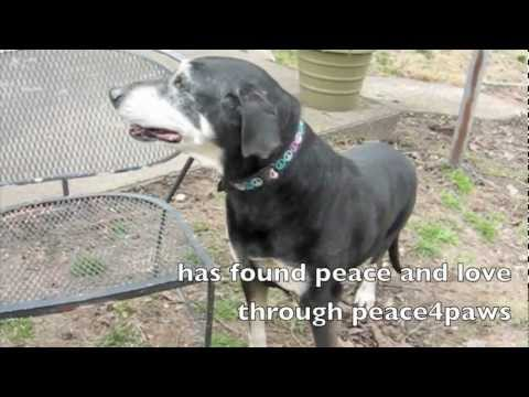 Puccini and Pasta from peace4paws - music by Sarah Brightman