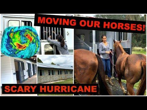 PREPARING THE HORSES FOR HURRICANE IRMA 2017