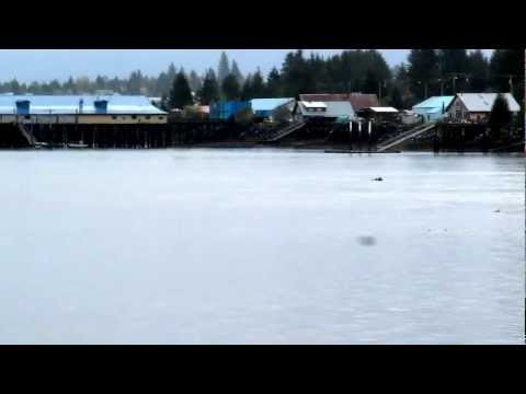Moose and Tug/Barge share the Wrangell Narrows