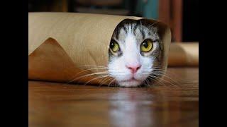 Я РЖАЛ ПОЛ ЧАСА. Смешные Коты и Собаки. ПРИКОЛЫ С ЖИВОТНЫМИ. Cute Cats 3