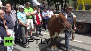 Germany: Milk farmers protest in Munich over plummeting dairy prices