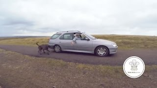 Lazy Pet-owner Took His Dogs Walkies On Welsh Mountain Without Getting Out Of His Car