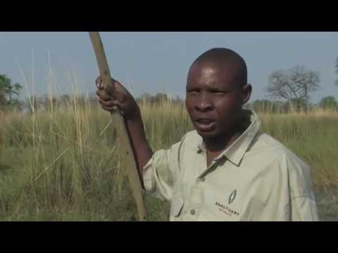 Zambeze Cruise around the world (Documentary, Discovery, History)