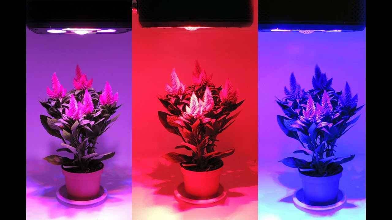 Nuevo panel grow pro led para cultivo interior inteligente en youtube - Pantalla led cultivo interior ...