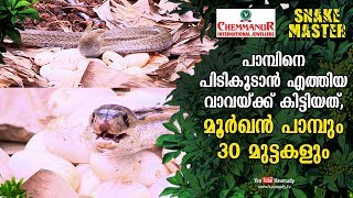 Vava Suresh who went to catch some snake got a cobra and 30 eggs   Snakemaster EP 443