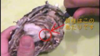 殻付き牡蠣の剥き方・開け方 thumbnail