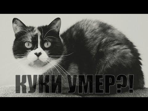 ПОЧЕМУ КУКИ В ОПАСНОСТИ?!КУКИ УМЕР?!СЛИВКИ ШОУ - SlivkiShow