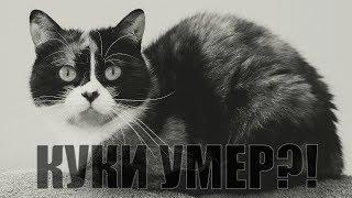 Download ПОЧЕМУ КУКИ В ОПАСНОСТИ?!КУКИ УМЕР?!СЛИВКИ ШОУ - SlivkiShow Mp3 and Videos