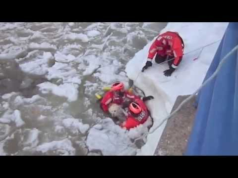 Heroes Save Dog From Freezing Lake