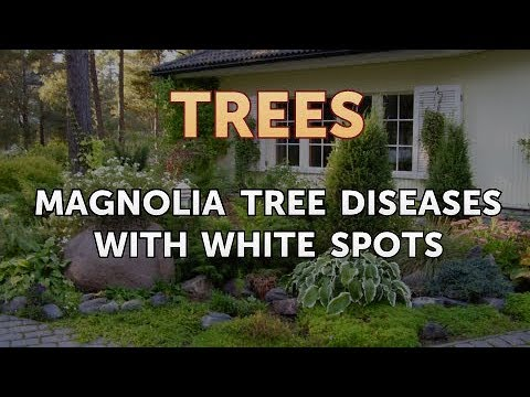 Magnolia Tree Diseases With White Spots Youtube
