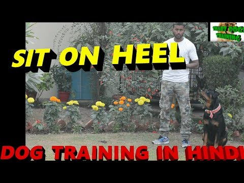 Train Your Dog SIT ON HEEL