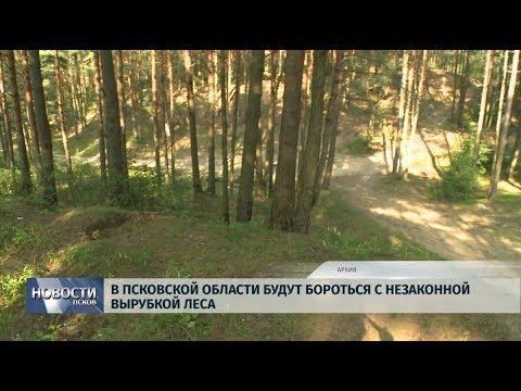 Новости Псков 16.08.2019 / В Псковской области будут бороться с незаконной вырубкой леса