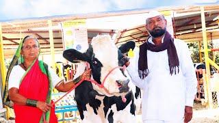 प्रकाश इमडे सांगोला | यांची २ लाख ११ हजार रुपयांची | होस्टेन जर्शी गाय | माहिती व मुलाखत | 2019