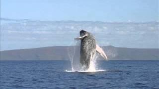Baixar Double Faced Eels - Zilais Valis (necenzēts+lirika aprakstā)
