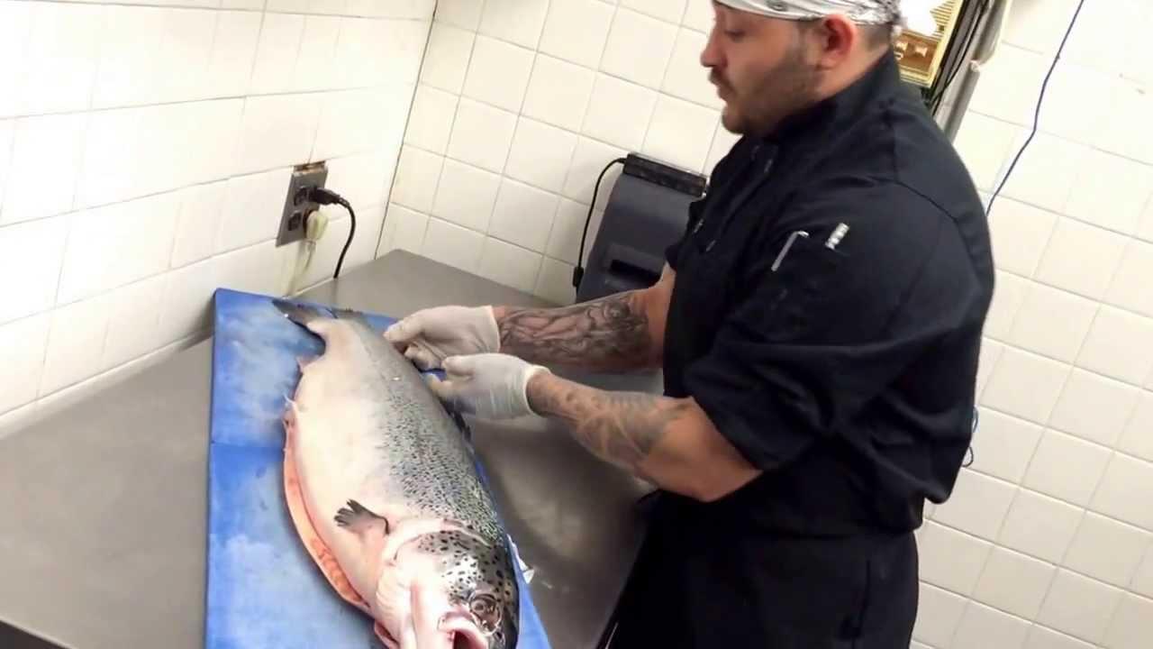 Anatomía del salmón - YouTube