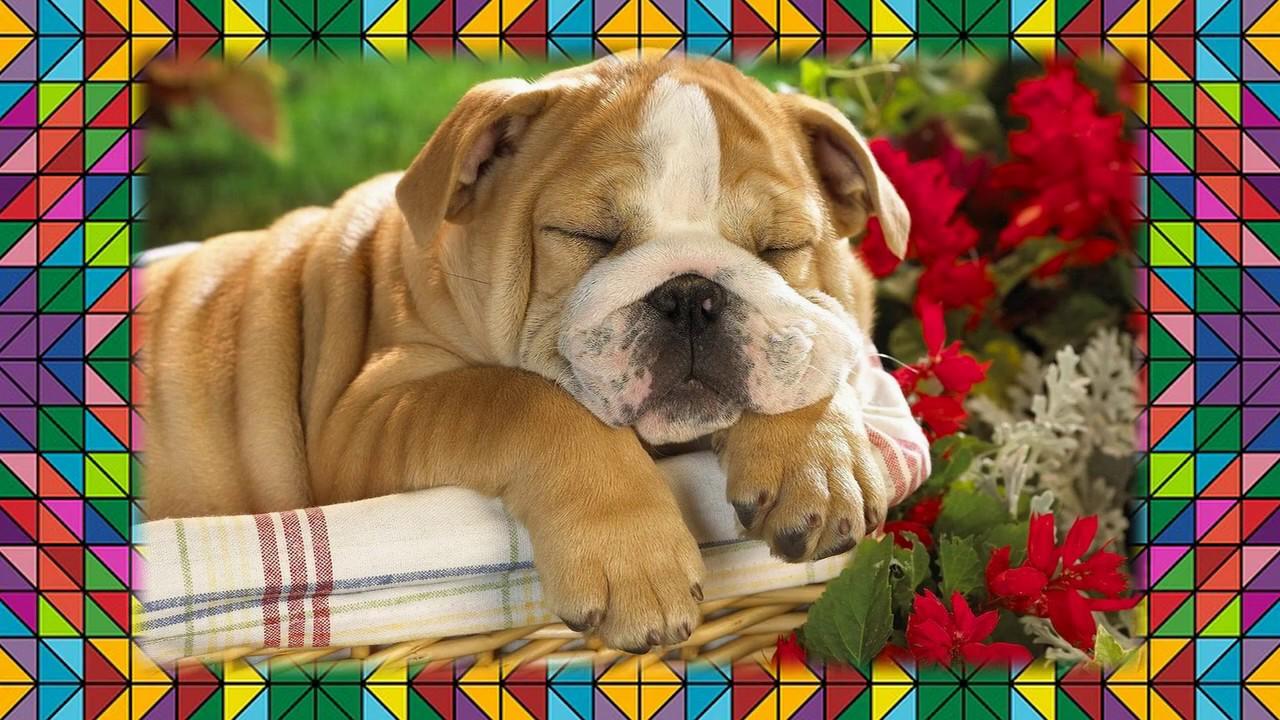 Доброго субботнего утра открытки с собаками
