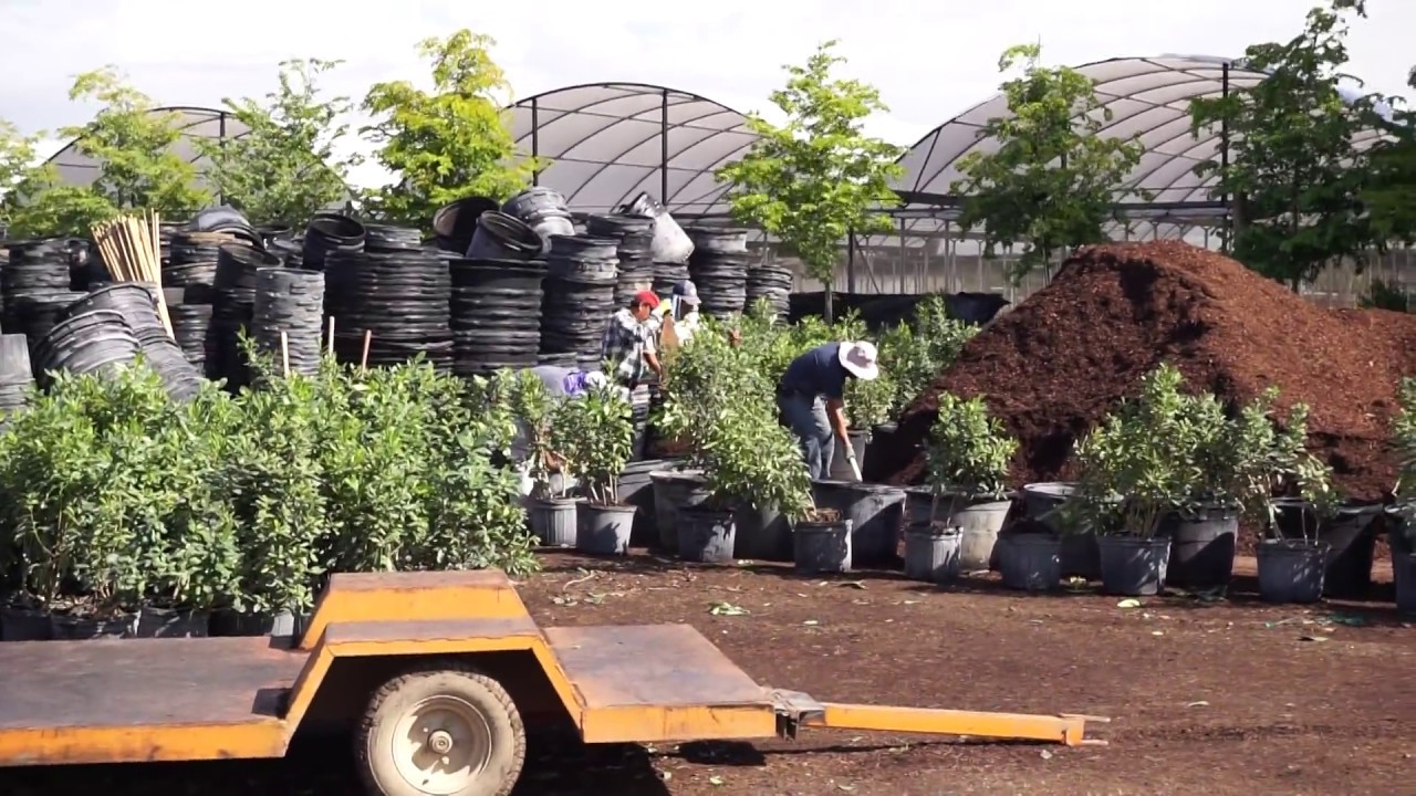 Treeworld Whole Trees Shrubs Plant Nursery In Homestead Florida
