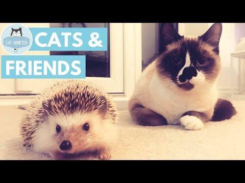 Cute Cats Best Friends Compilation