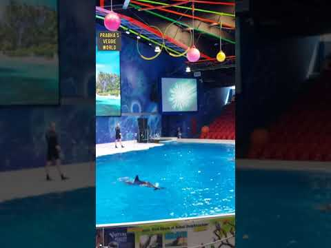 Dubai Dolphinarium #shortvideo #dolphinshow #vlogs #Dubaitourism #prabhasveggieworld #funvideo
