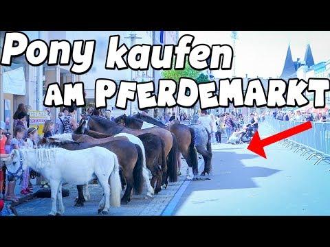 PONY KAUFEN am Pferdemarkt