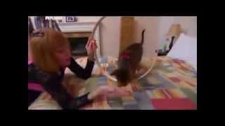 Абиссинская кошка: фото, описание породы, характер. Кошка абиссинской породы(Узнайте о абиссинских кошках. Подробная информация о породе на http://murkote.com/abissinskaya-koshka/ В статье вы найдете..., 2014-03-16T17:06:00.000Z)