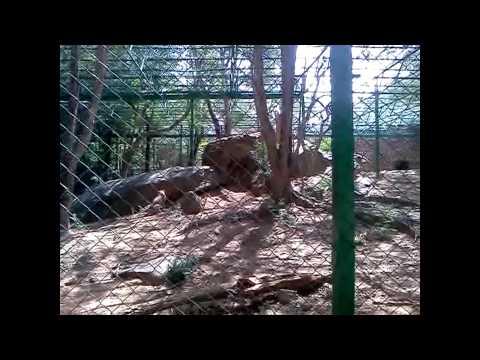 Bangalore Zoo