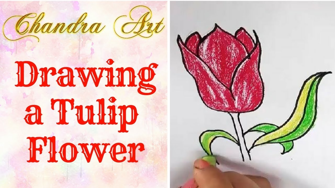 drawing a tulip flower - learning how to draw tulip flower and ...