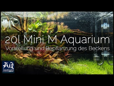 36cm-aquarium-einrichten-&-bepflanzen- -aquaowner