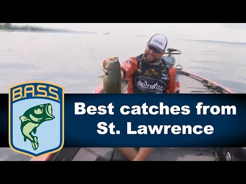 St. Lawrence River best catches of Bass Live