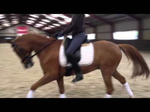 FOR SALE FEI Dressage Pony - Milano