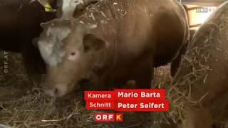 Stiermast Kärnten ORF Landwirt schafft