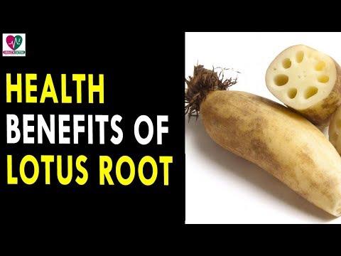 Health Benefits Of Lotus Root || Health Sutra Best Health Tips
