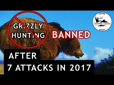 Why Grizzly Bear Hunting Was Banned In British Columbia Canada