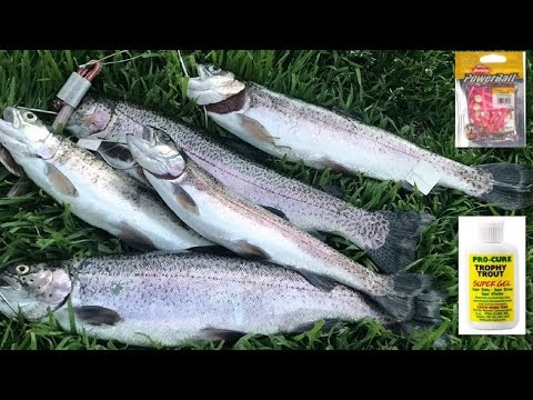 Catching trouts with Mice tail and Pro-Cure Trophy Trout Combo