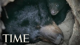 Father And Son Caught On Video Killing A Black Bear And Her Cubs In Alaska, Police Say | TIME