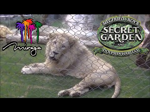 Siegfried & Roy's Secret Garden and Dolphin Habitat at The Mirage Tour & Review