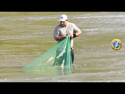 Watch as fishermen fish with hand net in torrential river waters