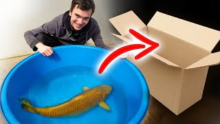 Unboxing my HUGE new pet koi fish!