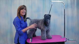 How to Groom the Kerry Blue Terrier for Pets & Show Dogs