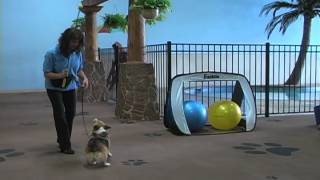 Far Fetched Tales Dog Training Treibball Intro