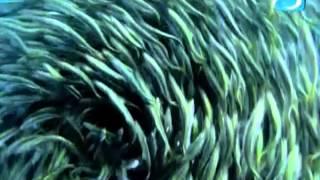 Голубая планета  - Тайны океана