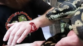 ERIC GETS A NASTY SNAKE BITE JUST TO EARN A BEEF STICK!!! | BRIAN BARCZYK